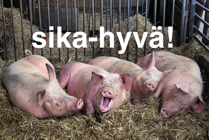 Photo of pigs with overlaid text that says: sika-hyvä